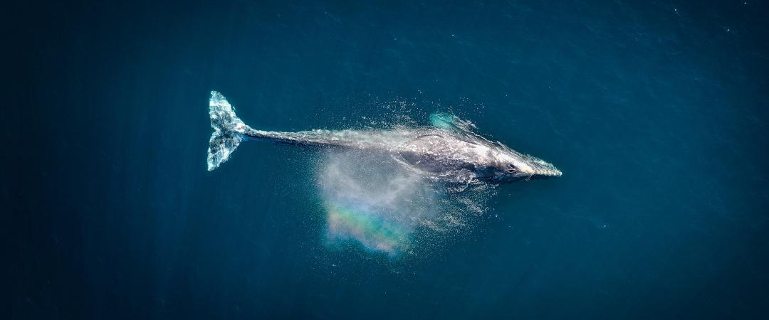 Hilf uns, wundervolle Wale zu retten