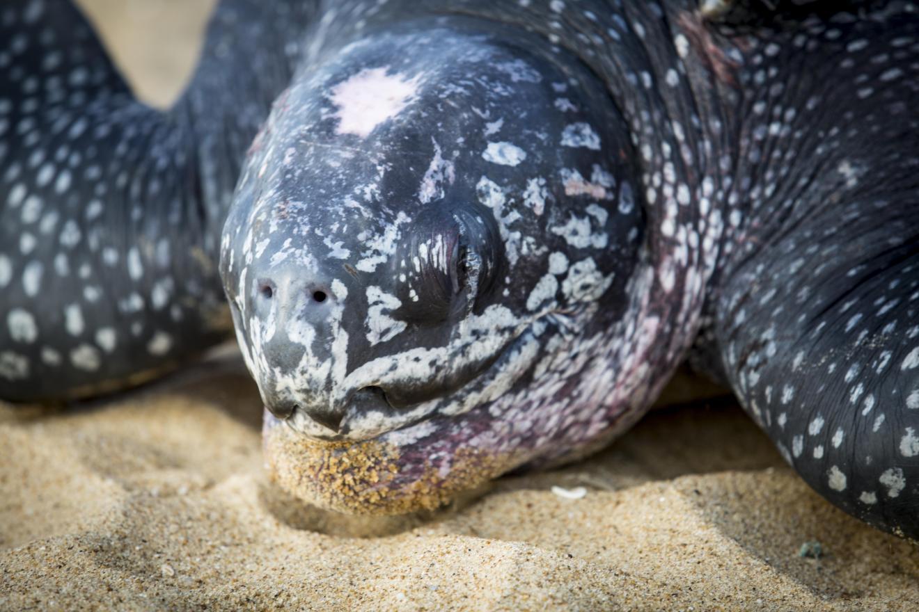 Ocean image gallery 1