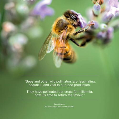 Protecting bees and other wild pollinators