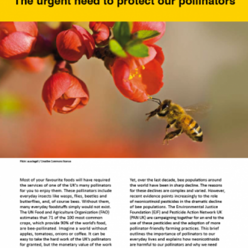 Poison Pesticides: The Urgent Need to Protect Our Pollinators