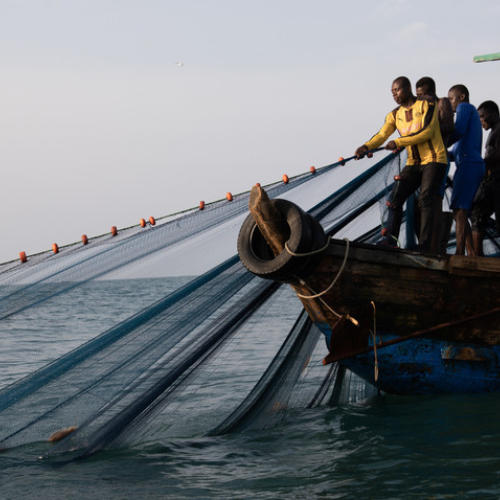 To save fish stocks Ghana must enshrine transparency in law
