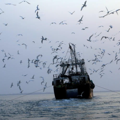 Landmark event in Brussels to encourage EU Member States to take stronger action on illegal fishing