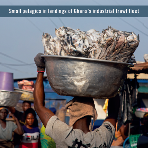 "The ""people's"" fishery on the brink of collapse: Small pelagics in landings of Ghana's industrial trawl fleet"