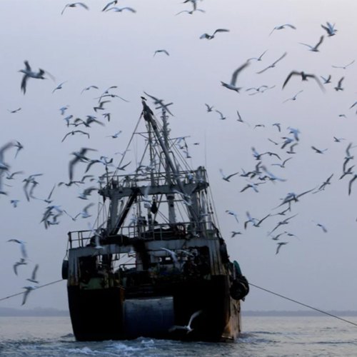 Ending Illegal Fishing