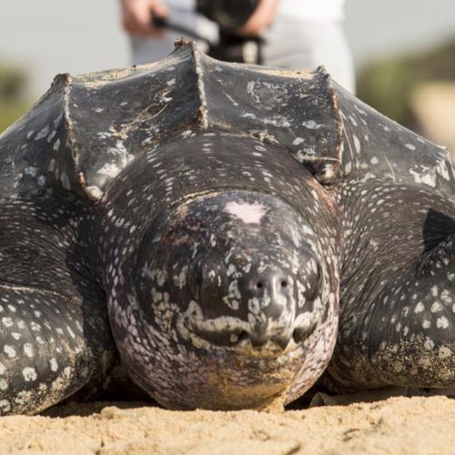 Protecting marine biodiversity