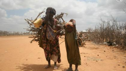 SDGs: Climate action key to securing sustainable development for all