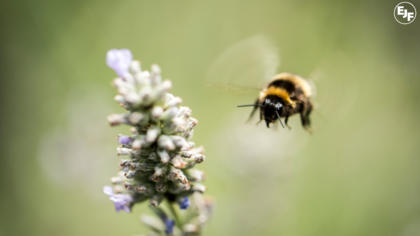 What allotments mean for bees - an Interview with Grant Smith