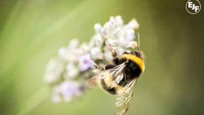 Beyond Honey: Five reasons to protect our bees