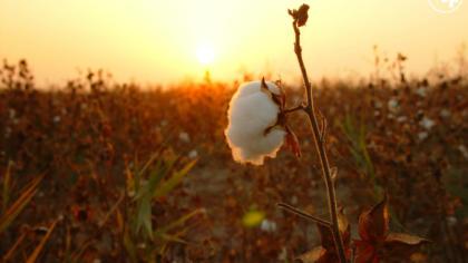 European Parliament rejects proposal to reduce tariffs on Uzbek textiles