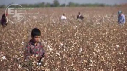 Coton: child labour and human rights abuses
