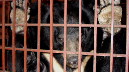 Wildtiermärkte ein für alle Mal schließen: