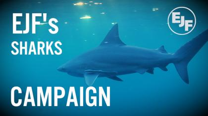 EJF's Sharks Campaign