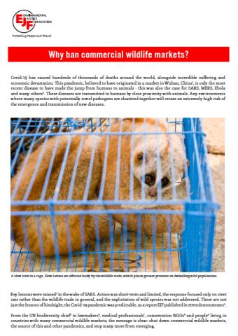 Warum kommerzielle Märkte für Wildtiere verbieten?