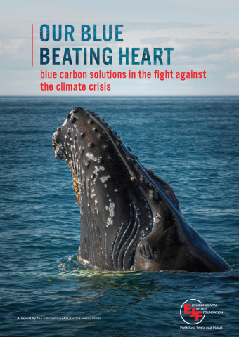 Our blue beating heart: Blue carbon solutions in the fight against the climate crisis