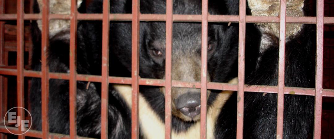 Wie sich COVID-19 durchgesetzt hat und warum wir den Handel mit Wildtieren beenden müssen