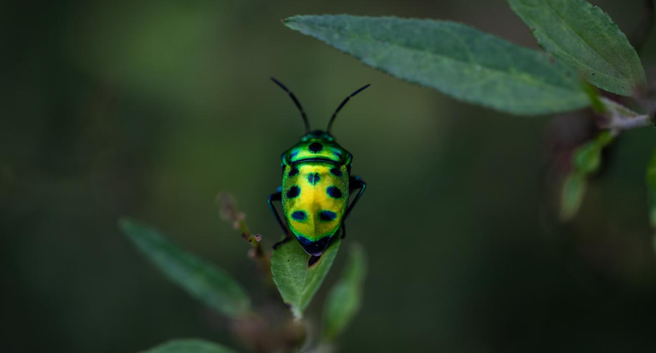 """Der Verlust der biologischen Vielfalt ist mehr als ein """"Umweltproblem"""""""