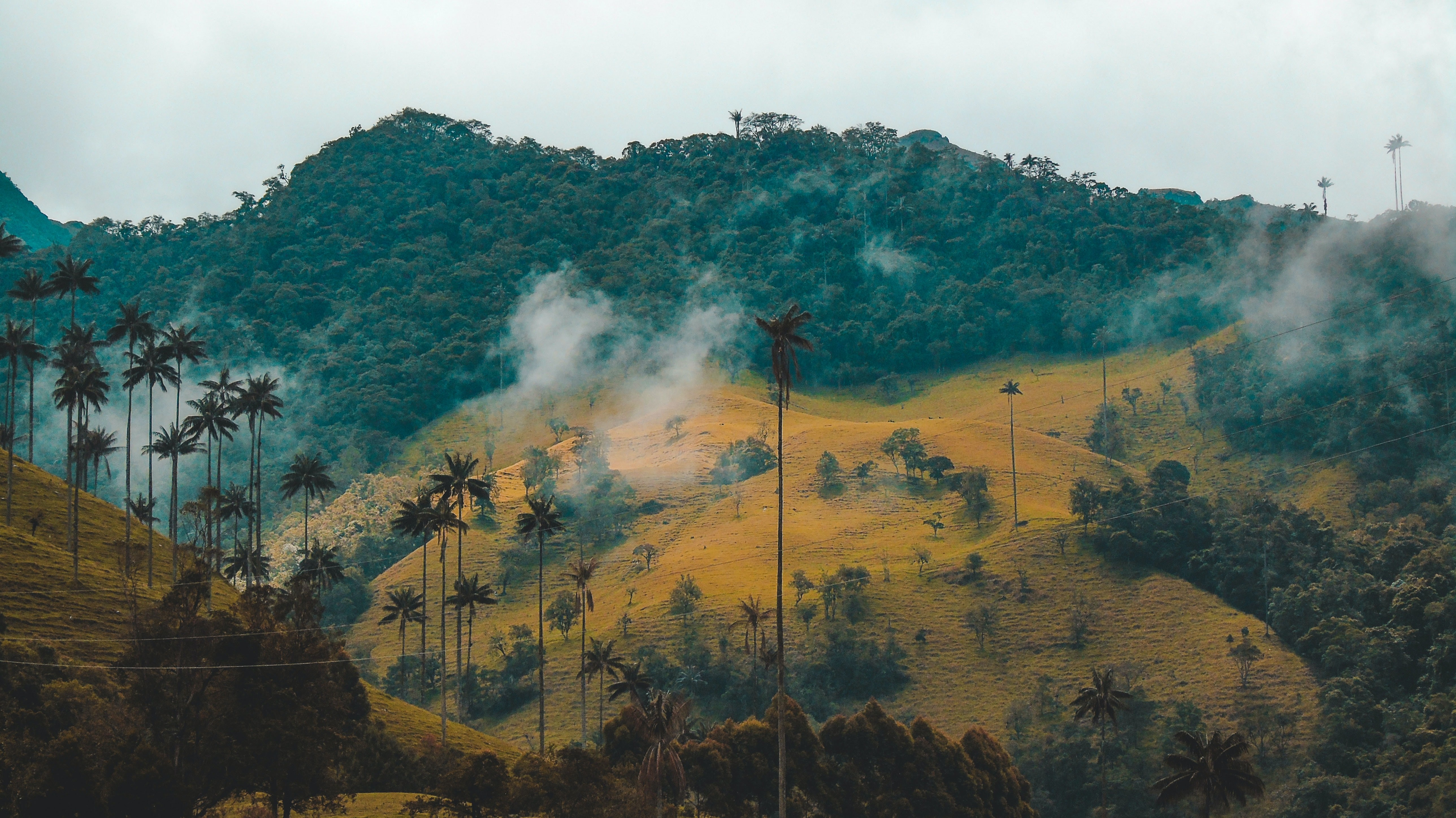 Indigene in Kolumbien protestieren, wir müssen uns mit ihnen verbünden