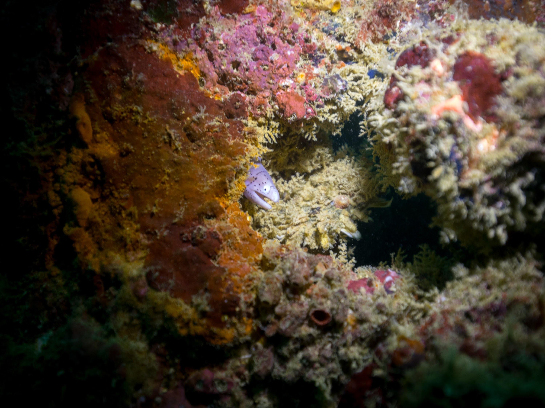 Eel seychelles