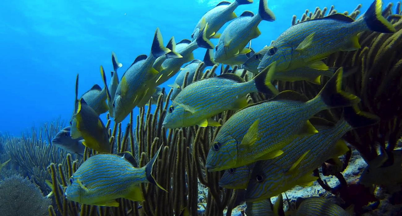 Warum die WTO schädliche Fischereisubventionen beenden muss