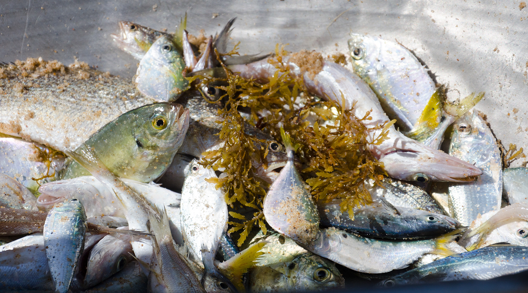 Subsidising industrial fishing needs to stop - now