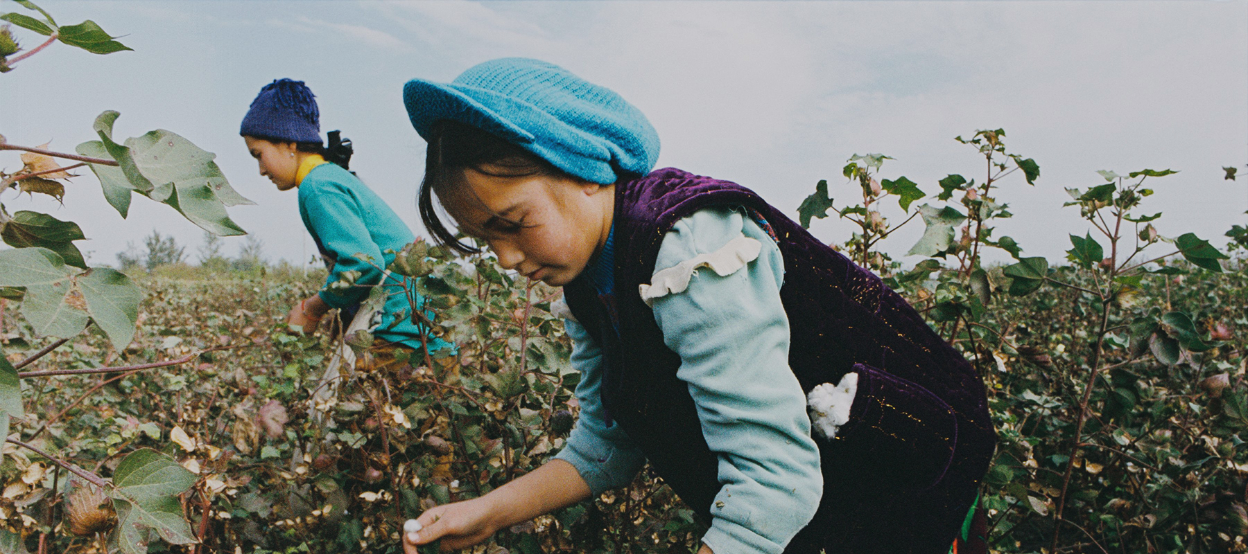 The true costs of cotton