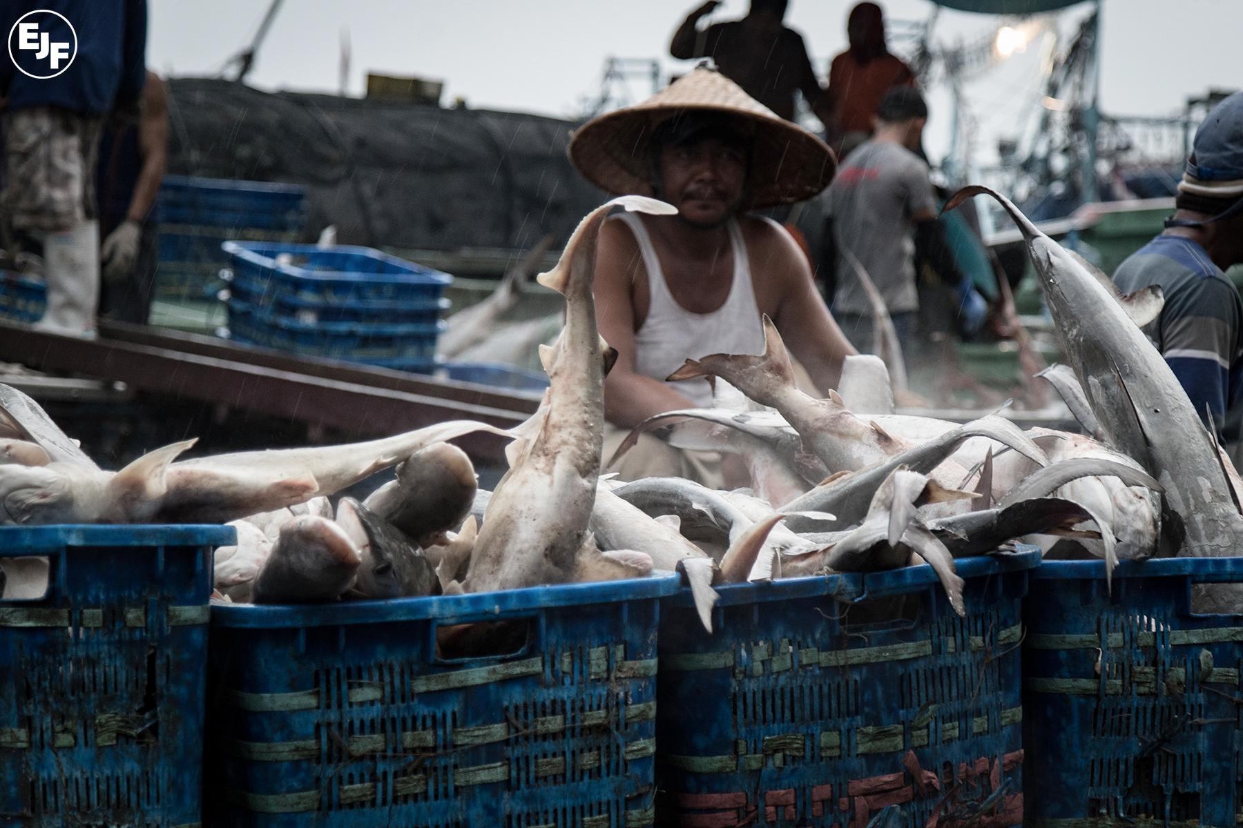 indonesia-sharks.jpg#asset:2048