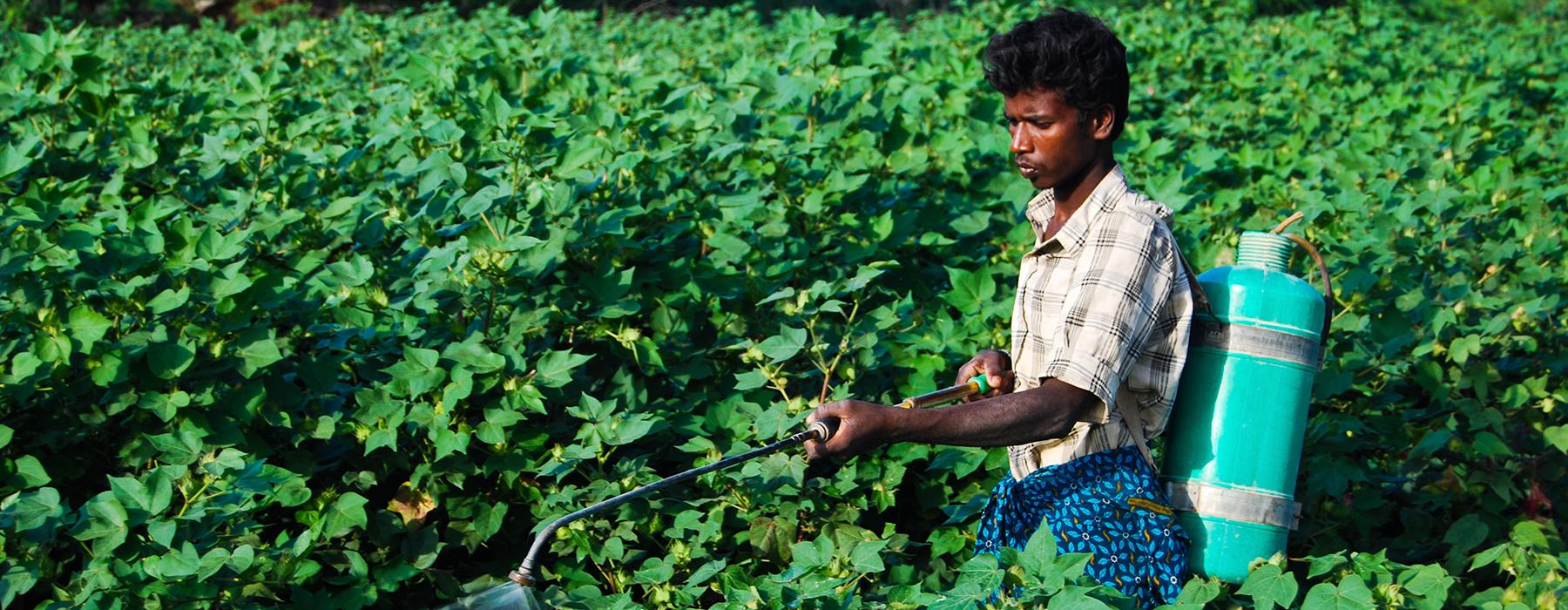 Eradicating toxic pesticides