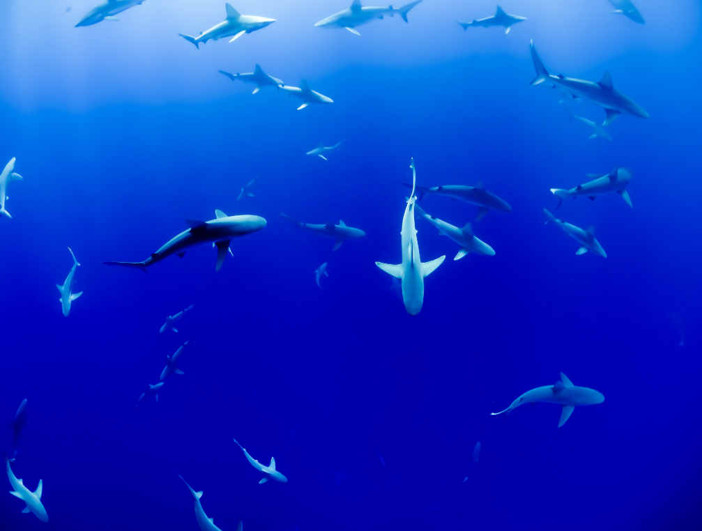 New initiative gives EU citizens the chance to save sharks