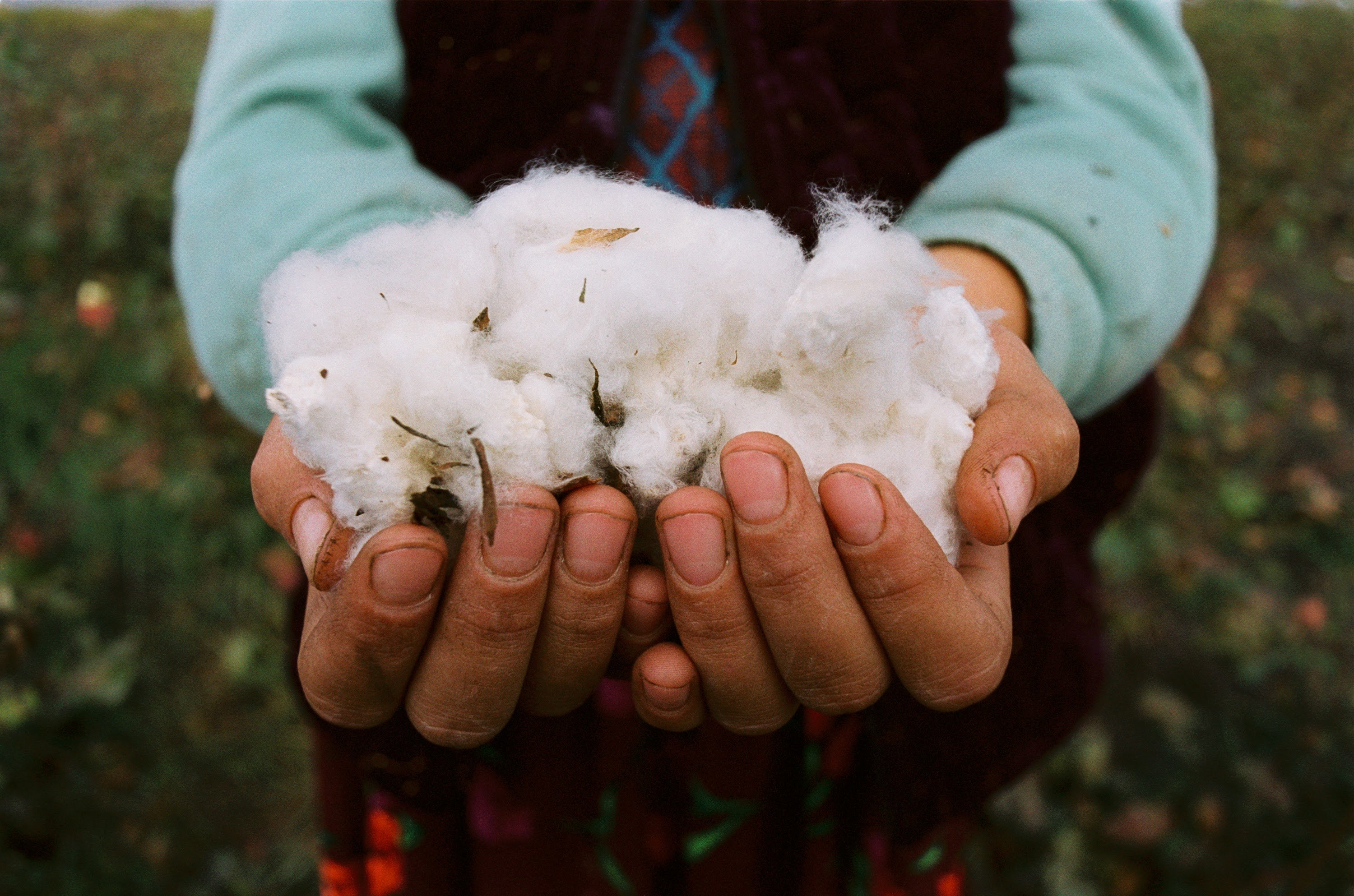 Cotton in Uzbekistan: how 'white gold' destroys the environment and human rights
